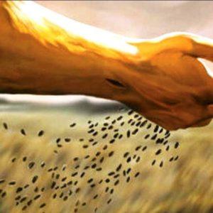 """Parola della Domenica """"Così è il regno di Dio"""""""