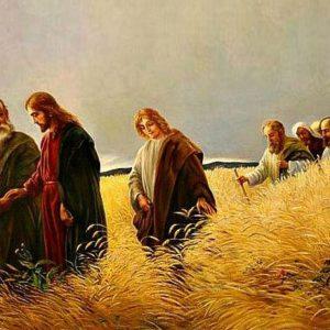 """Parola del giorno """"…se il chicco di grano, caduto in terra…"""""""