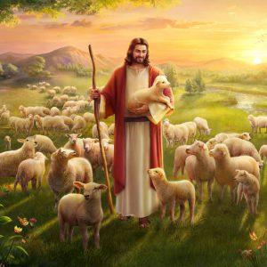"""La parola del giorno """"ho trovato la mia pecora…"""""""